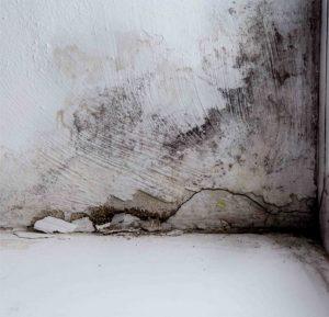 Wand im Keller mit Schimmel